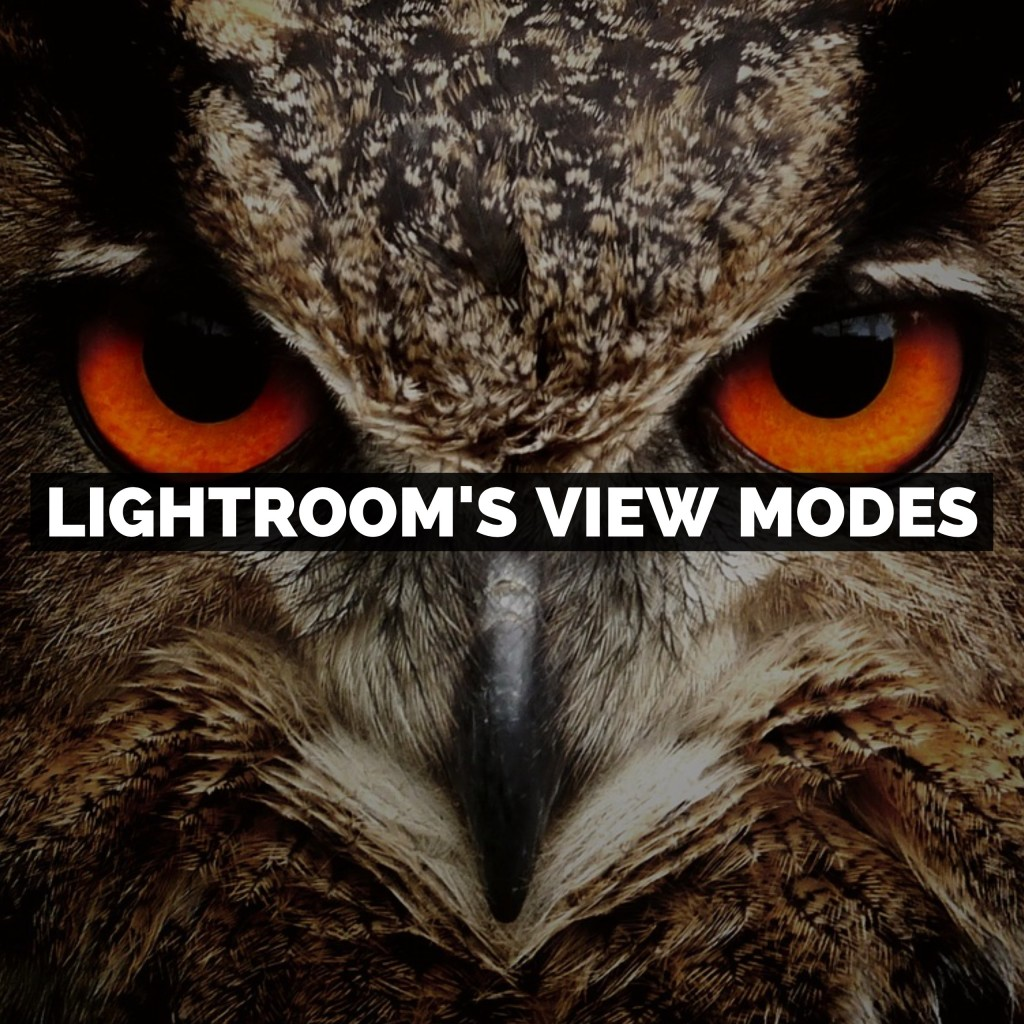 How To Use The View Modes In Adobe Photoshop Lightroom Classic