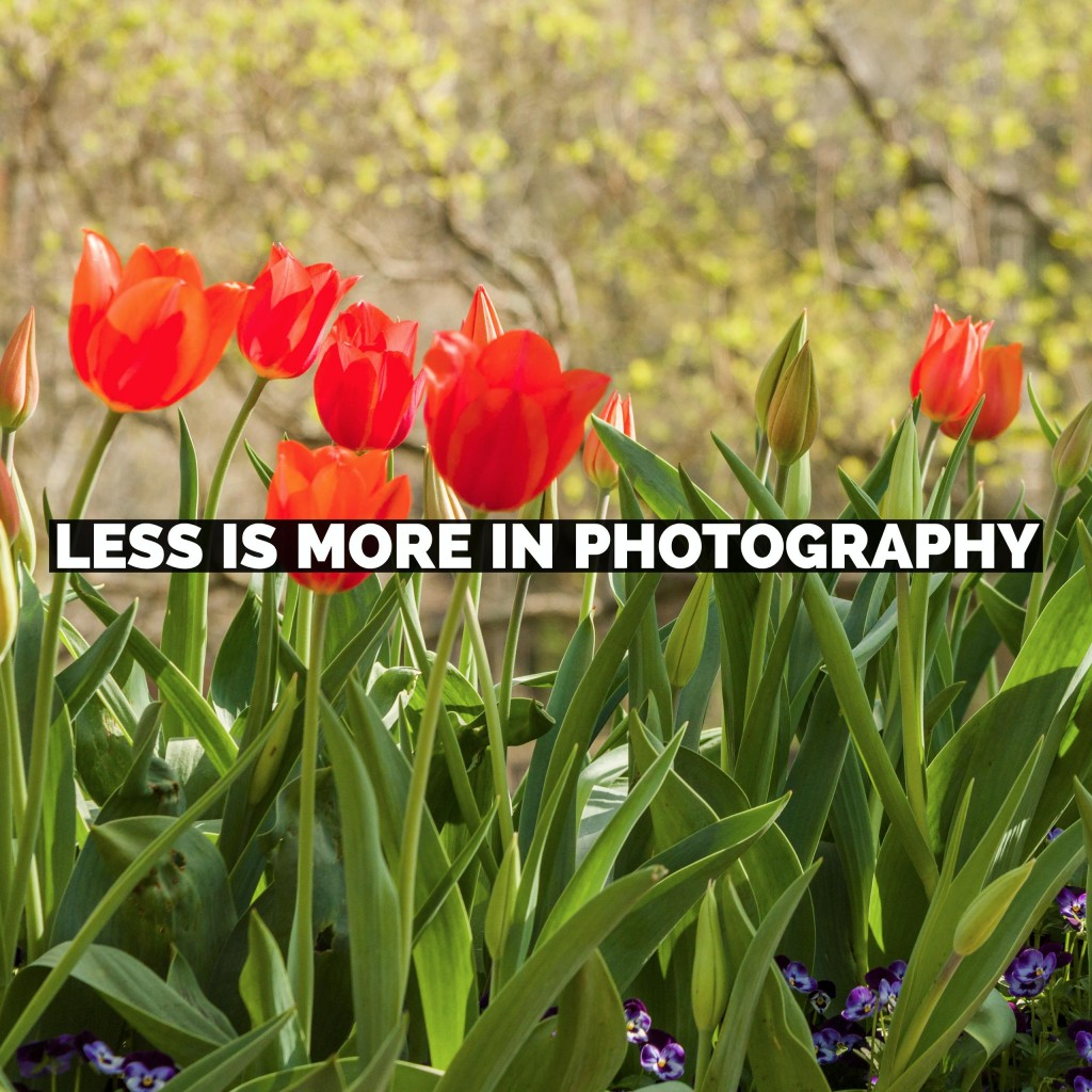 Less Is More In Photography