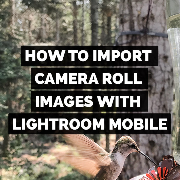 How To Import Images From Your Camera Roll Into The Adobe Lightroom For Mobile App