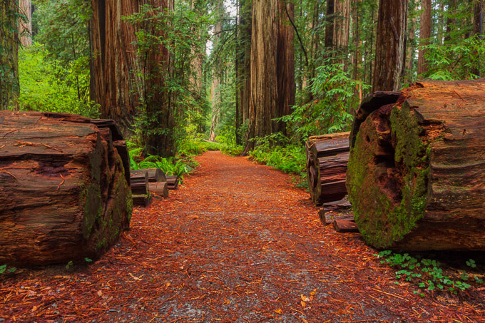 Redwoods National Park Photography Workshop